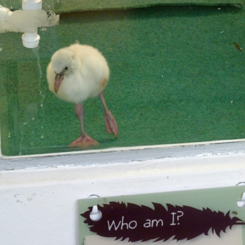 existential flamingling